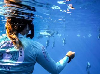 Dolphins and You is the longest-running dolphin swim tour in Hawaii