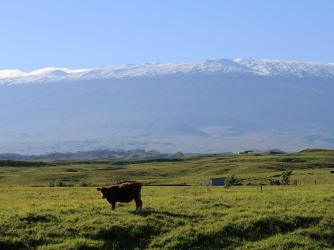 Ranch & maunakea