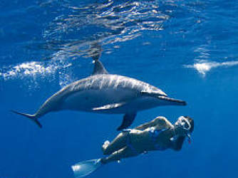Dolphin Swim - Snorkeler with dolphin