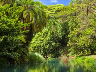 Lawai Stream in McBryde Garden