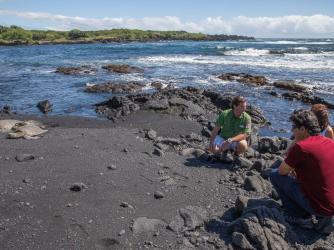 Sea Turtles - Sea Turtles at Punaluu Black Sand Beach