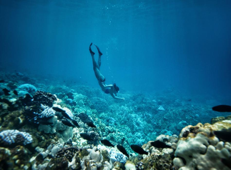 Snorkeling & Scuba