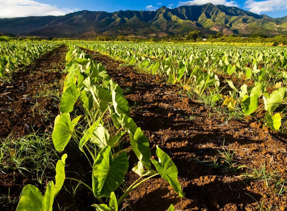 Farm Tours On Maui Maui Farm Tours Go Hawaii