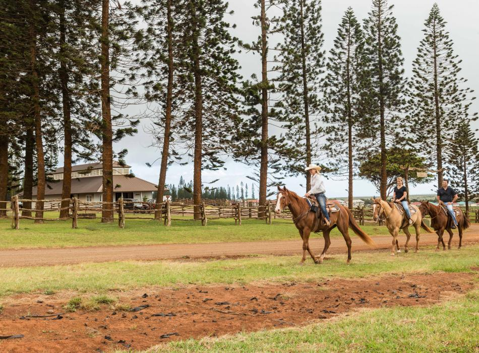 Guided horseback riding on Lanai