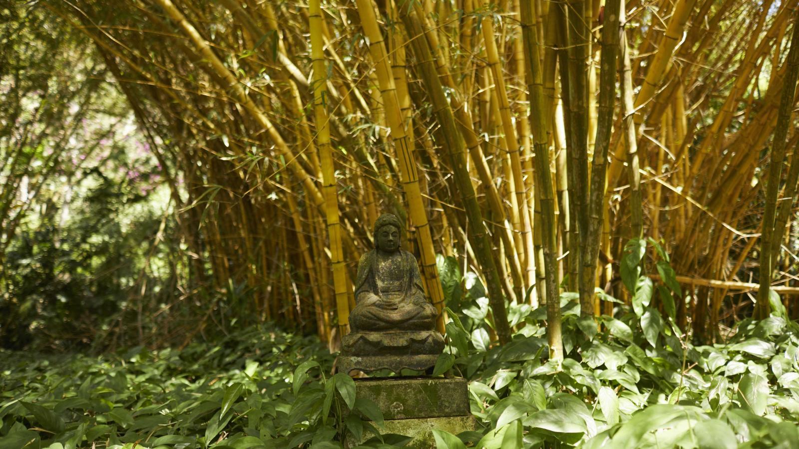 Allerton Garden Kauai Go Hawaii